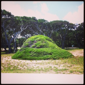 A cool bush mound